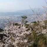 宮崎県愛宕山の桜