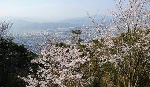 地元民イチ押しの宮崎県お花見穴場スポットは愛宕山の山桜♪延岡市街を一望できる