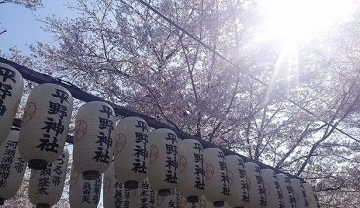 京都人が知る穴場のお花見スポット!平野神社の桜は風情たっぷり!