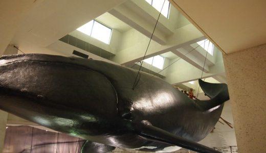 和歌山県の観光穴場スポット「太地町立くじら博物館」行ってきました