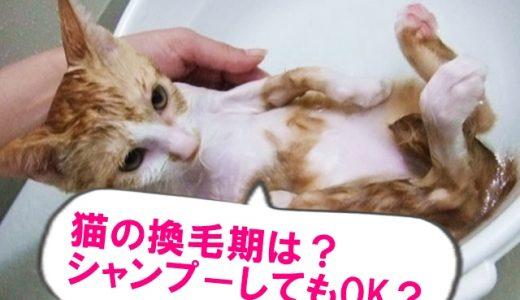 猫の換毛期は何月?期間はどのくらい?お風呂やシャンプーしてもいいの?