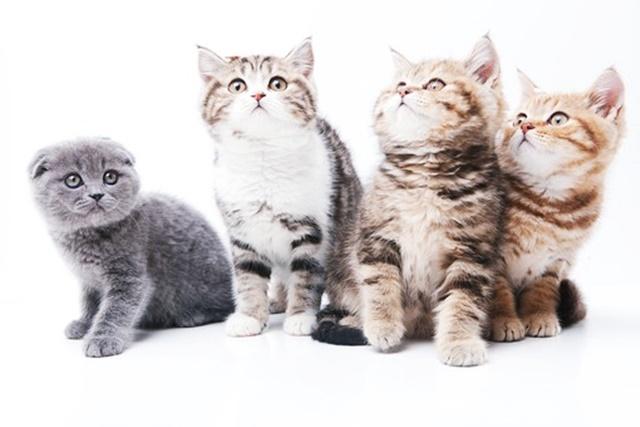 猫の換毛期とシャンプー